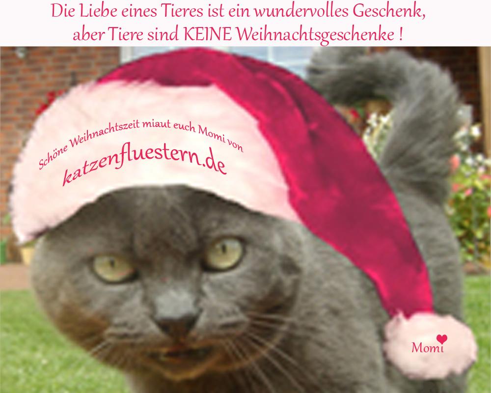 Tiere sind KEINE Weihnachtsgeschenke - Katzenflüstern - Katzenblog ...
