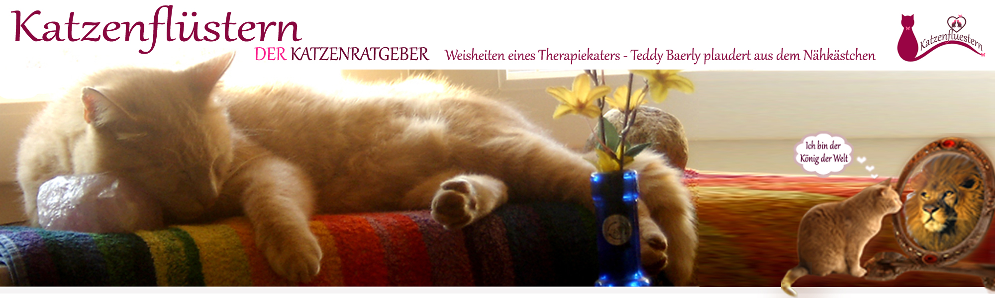 Katzenflüstern – Katzenpsychologin und Katzenratgeber