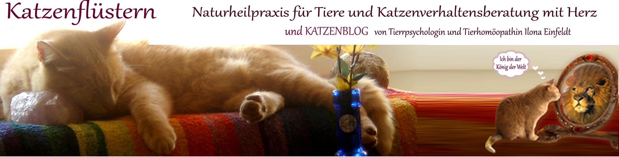 Katzenflüstern – Katzenblog und Praxis für Katzen